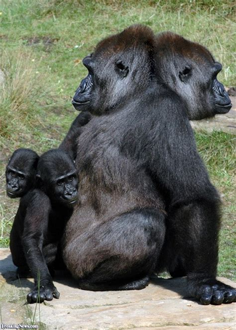 two headed two headed animals pictures freaking news