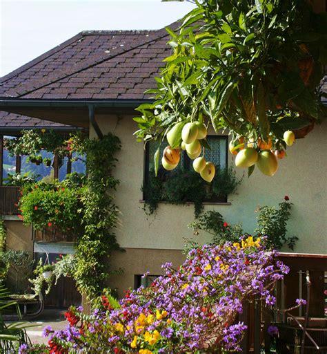 himbeeren pflanzen balkon himbeeren pflanzen balkon himbeeren auf dem balkon