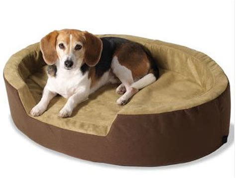 puppy in bed the gallery of the pet bedroom models and design
