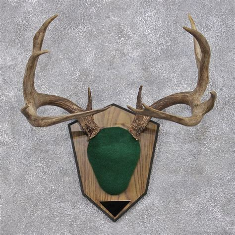 antler plaque patterns bing images