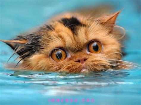 donne che fanno il bagno gatti che si fanno il bagno e nuotano 29 foto