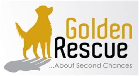 canadian golden retriever adoption service inc doggone wonderful sponsorship