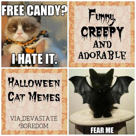 Halloween Cat Meme - 17 best images about funny on pinterest groundhog day