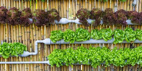 8 reasons why you should start a vertical garden