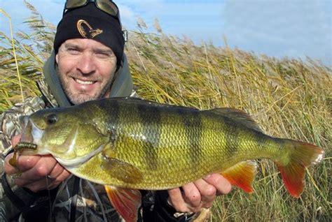 U K Records Big Fishes Of The World Perch European Perca Fluviatilis