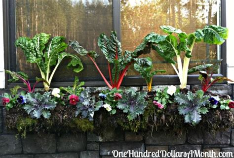 garden planter boxes ideas detec ideas for fall planting in pots learn how