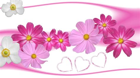 wallpaper flower with heart pink flowers and hearts wallpaper 655