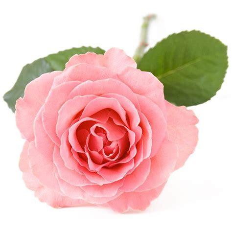 floral preservative floral preservative best free home design idea