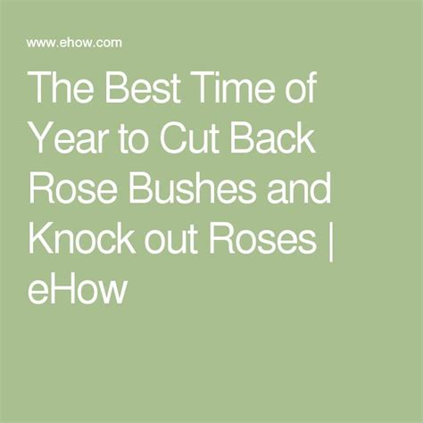 the best time of year to cut back rose bushes and knock out roses the o jays roses and rose bush