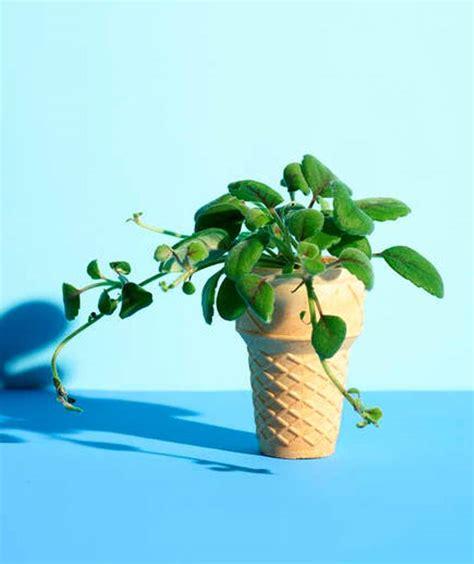 berkebun tanpa lahan siasat salurkan hobi berkebun meski tanpa lahan okezone