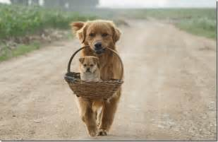 Dogs puppies pictures of dog puppy dogs funny animals funny