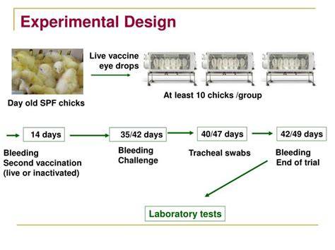 design an experiment using vaccinia virus ppt genotype and protectotype characterization of ibv
