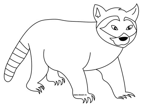 coloring page raccoon printable raccoon coloring pages coloring me