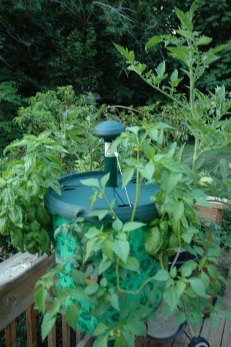 Inverted Planter by Inverted Planter After Three Weeks Eht