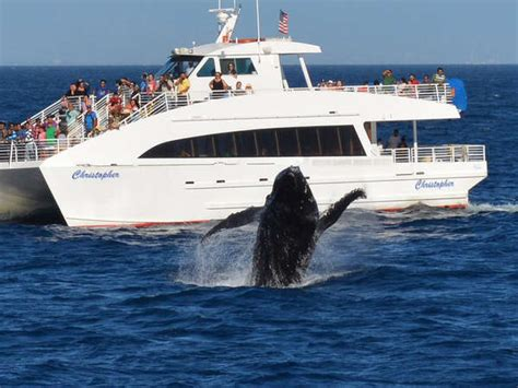 los angeles boat tours la whale watching best whale watching cruises