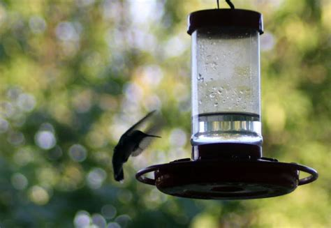 why do hummingbirds stop coming to feeders wiring diagrams