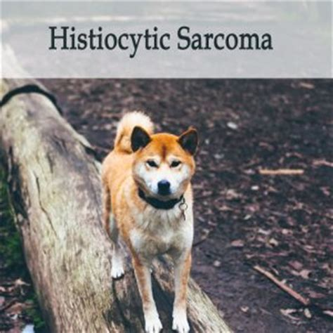 histiocytic sarcoma in dogs herbal treatments for cancer in dogs general faq caraf avnayt s herbal treatments