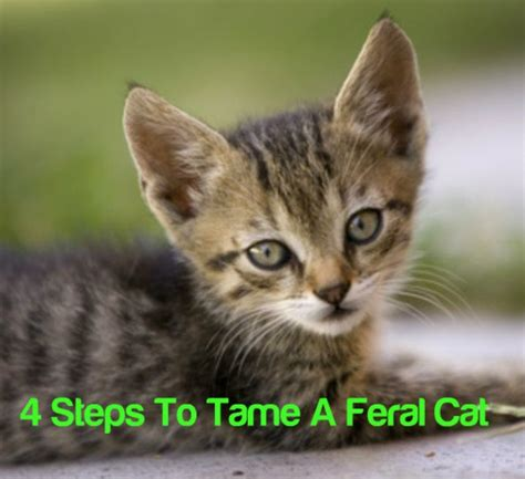 how to a feral 17 best ideas about feral cats on outdoor cat shelter feral cat house and