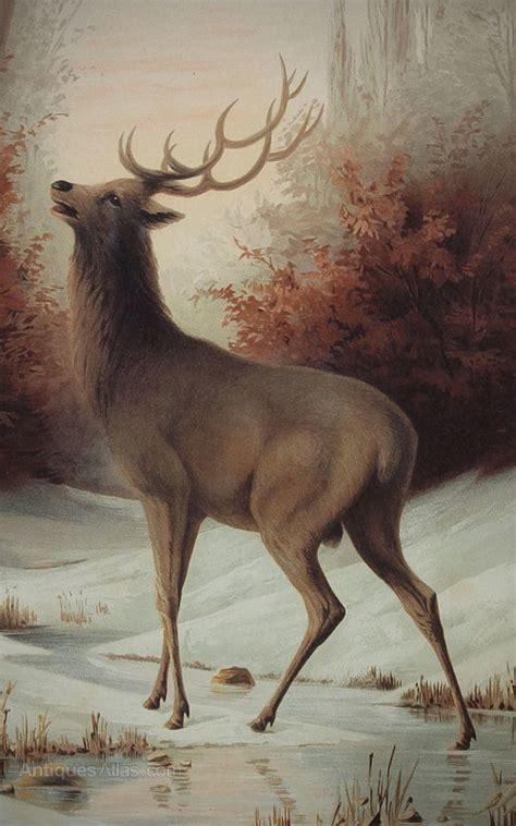 antiques atlas pair  large stag prints