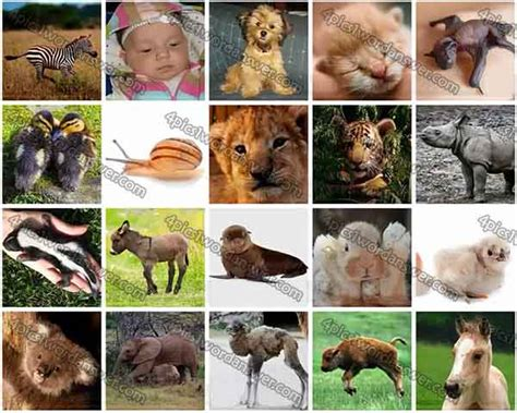 pics baby animals answers  pics  word daily puzzle