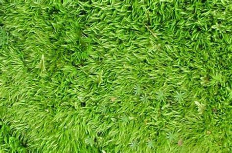 Make A Moss Bath Mat by How To Make Your Own Moss Bath Mat Crafties