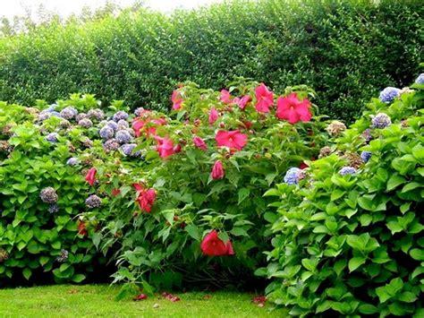 siepi fiorite da giardino siepi miste siepi siepi miste giardino