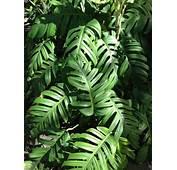 Tropical Leaves  Selva Pinterest