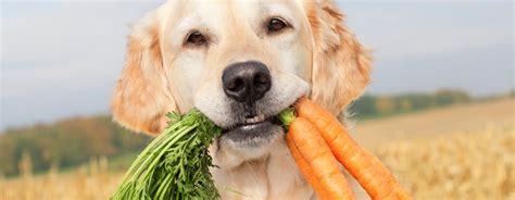 alimentazione vegetariana per cani la verit 224 riguardo le diete vegetariane per cani cani
