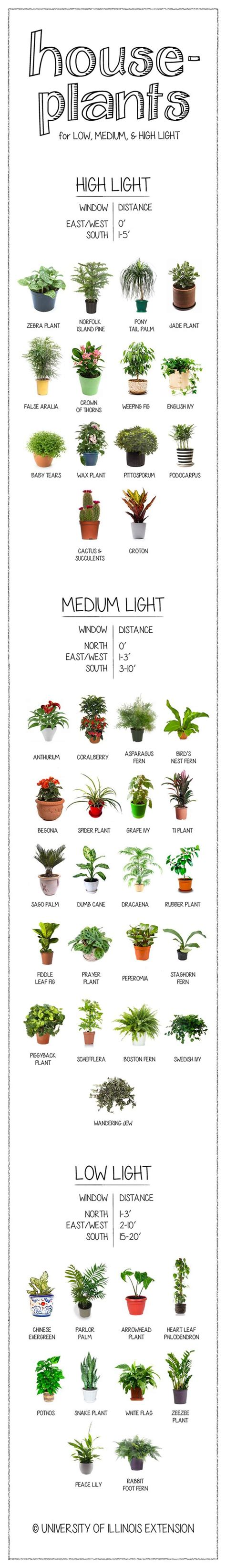top houseplants for low medium and high light conditions houseplants for low medium bright light infographic
