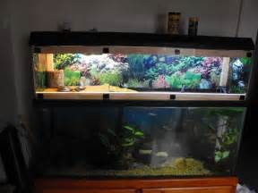 turtle tank   my 55 gallon eastern painted turtle set up with homemade