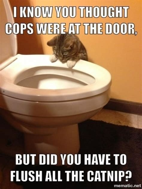 toilet meme a cat staring into a toilet bowl with humorous text above