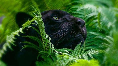 imagenes de animales salvajes en 4k mira estos fondos de animales en 4k pasa y deleitate