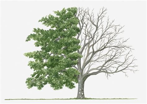 amazing facts about deciduous trees we all should know