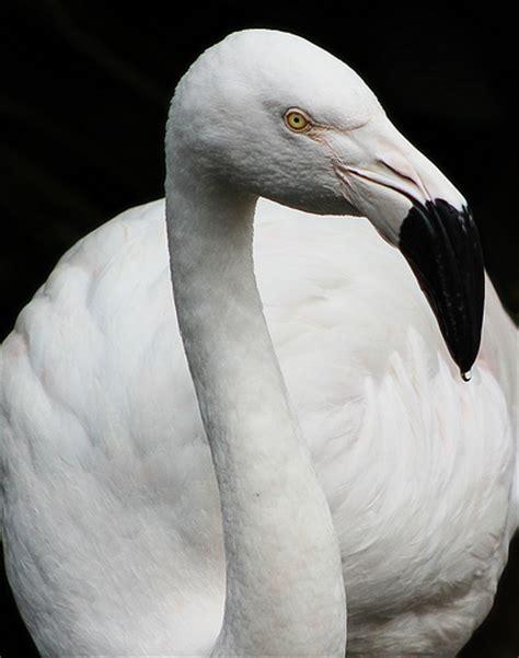 white flamingo digital photography school photography forums