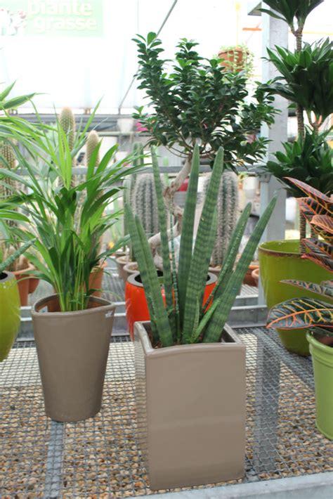 piante d arredo vasi e piante d arredo floricoltura decataldo