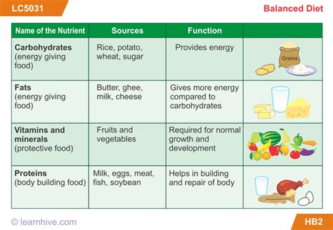 carbohydrates for class 7 learnhive cbse grade 6 science components of food