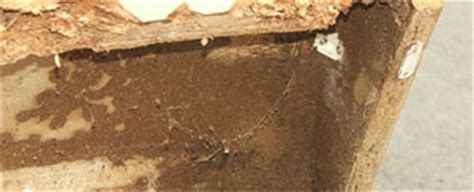 Termites In Furniture by Termite Treatment Tips How To Kill Termites For
