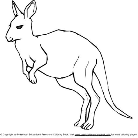 coloring page kangaroo free coloring pages of color the kangaroo