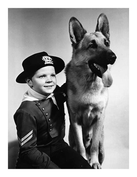 Rin Tin Tin 46 best images about la loi des s 233 ries 1960 1980 on