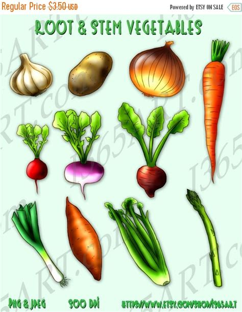 root vegetables list 50 sale root and stem vegetables clipart by i365art