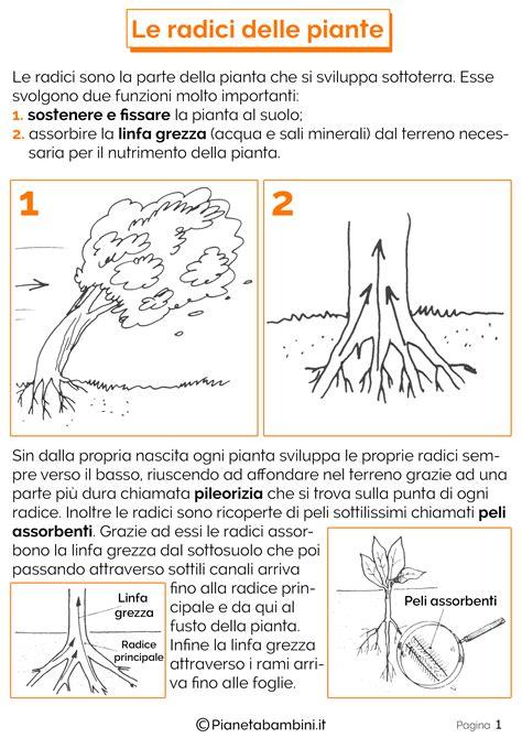 test italiano interno risultati risultati immagini per schede didattiche sulle radici