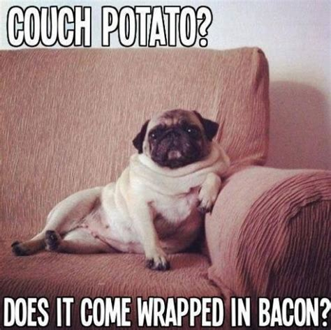 Pug Memes 183 Best Images About Pugs On Pug