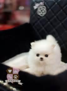 Adorable cute dog fluffy puppy small image 54876 on favim com