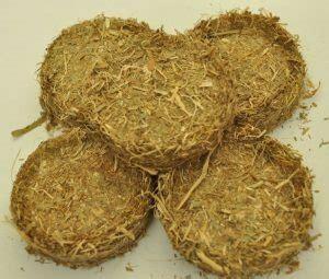 Harga Jagung Pakan Ternak 2018 yuk tambah pundi rupiah anda dengan limbah tanaman jagung