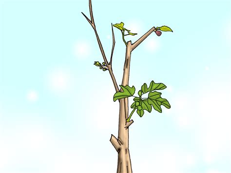 how to prune a cherry tree 11 steps with pictures wikihow party invitations ideas