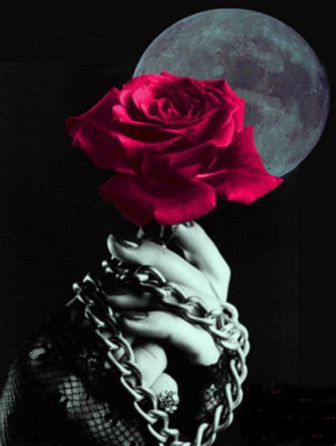 Imagenes Goticas Brillantes | rosa brillante flor de terciopelo