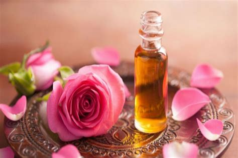 Minyak Ikan Terbaru minyak mawar khasiat