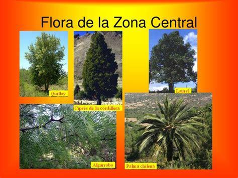imagenes de flores de la zona norte ppt conociendo chile powerpoint presentation id 5514222
