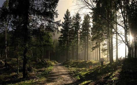 foto hutan terbaru   indah