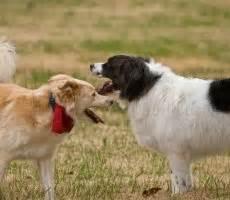 puppy socialization near me find local leash parks near me search leash parks